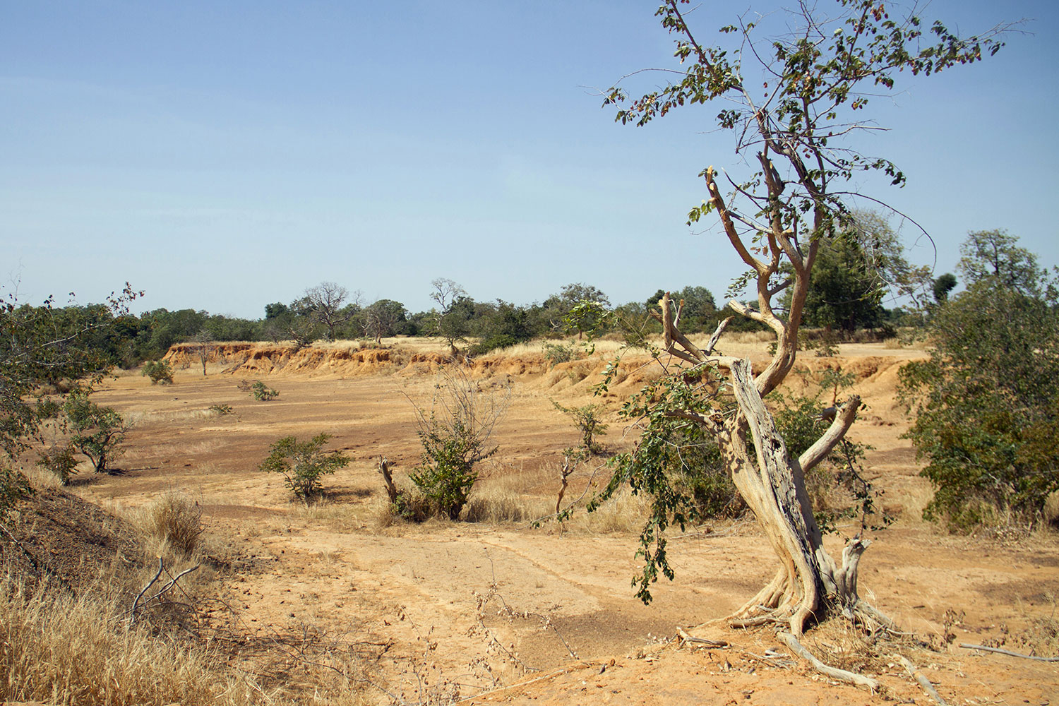 Parched land is pictured around the Lake Wegnia, in Sahel region of Koulikoro, Mali on November 22, 2019. Picture Shows a lonely tree, small and scrubby with many of its branches dead. It's in a dry gully with a few other green scrubby bushes scattered in the frame—but mostly nothing but dry yellow dirt and sand everywhere the eye can see off into the distance. REUTERS/Arouna Sissoko