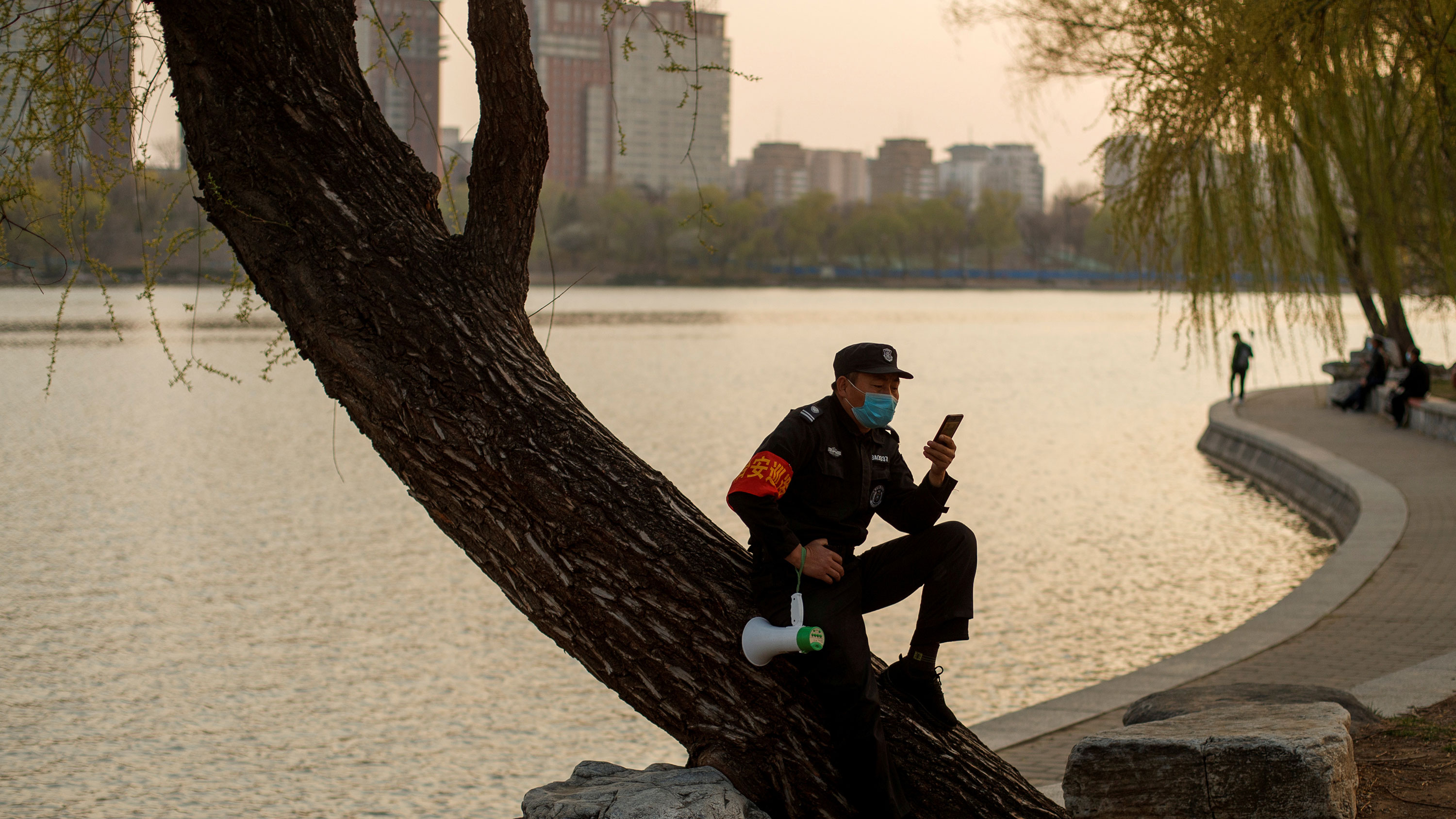 The photo shows a man sitting in a tree by a lake with a meandering walk. He is looking at his phone.