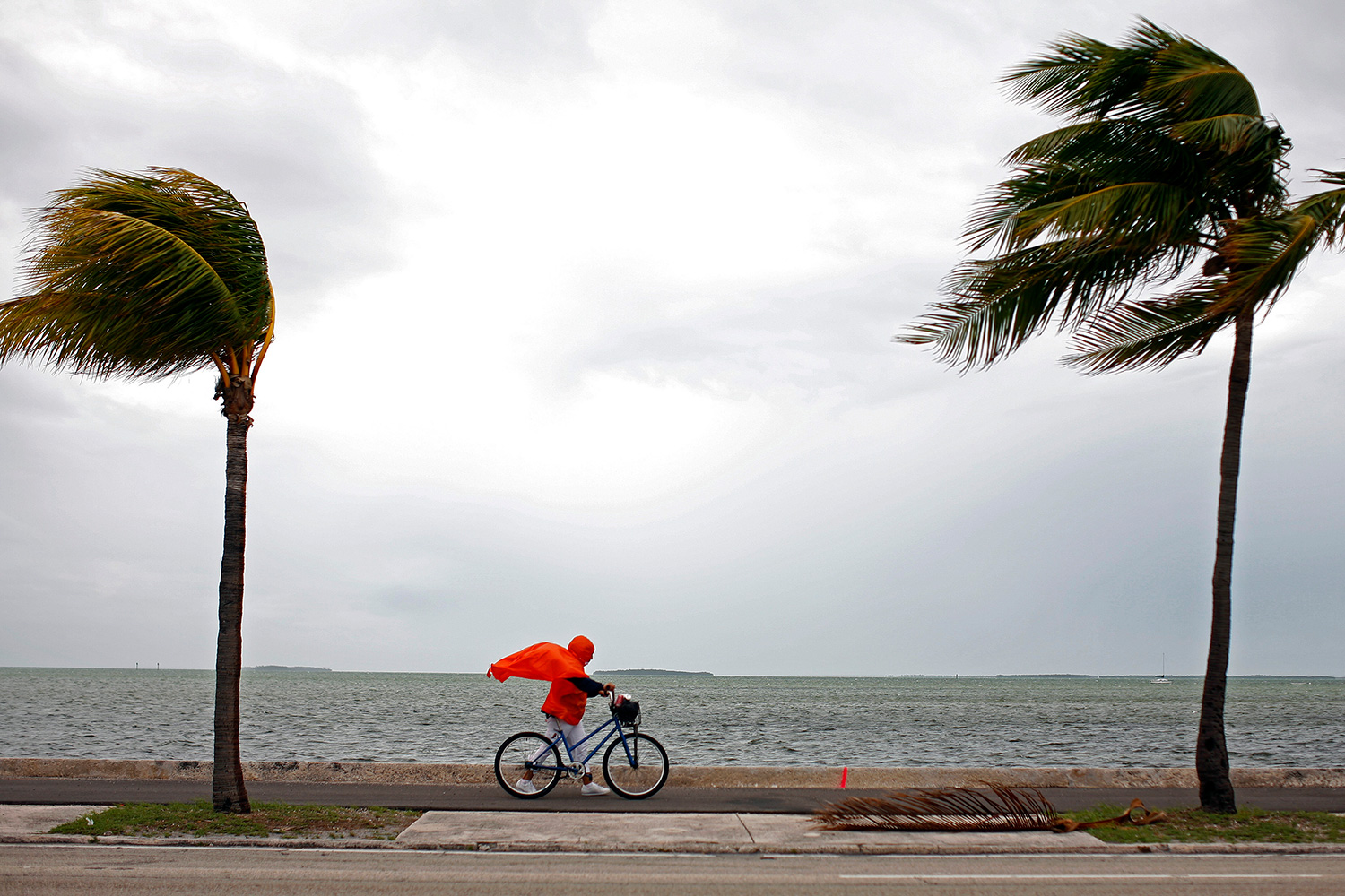 The photo shows the woman walking into a tremendous headwind. Her bright red rain poncho is billowing, and two palm trees, one in front of her and one behind her, are blowing in the same direction.