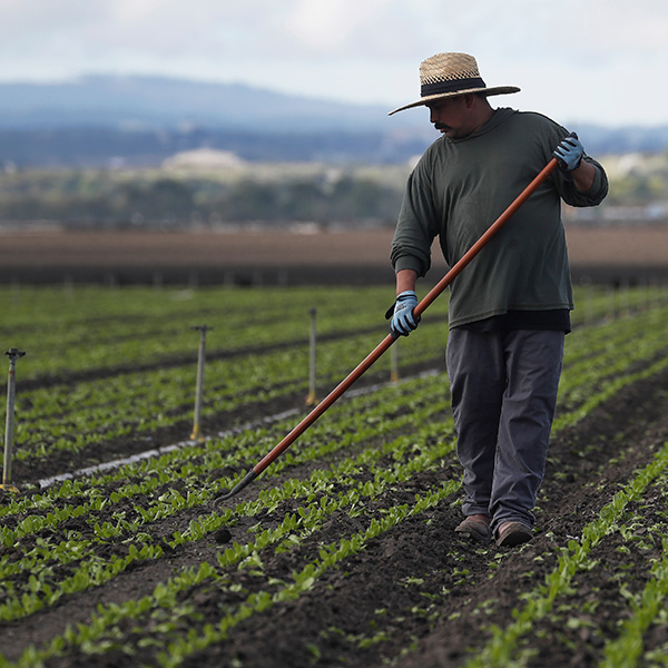 Migrant worker Cesar Lopez works the fields amid an outbreak of the coronavirus disease (COVID-19), in Salinas Valley, California, on March 30, 2020. Picture shows Cesar working with a hoe in his hand. REUTERS/Shannon Stapleton