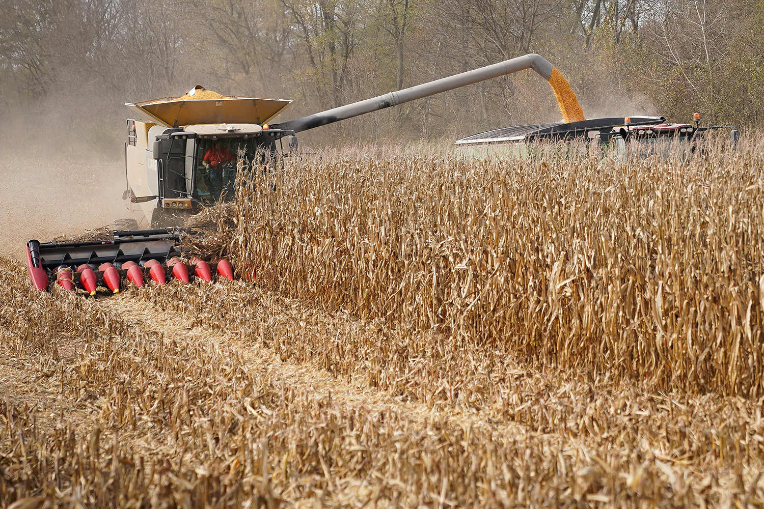 Picture shows a harvester moving down a line of corn and shooting the harvested kernels into a truck.