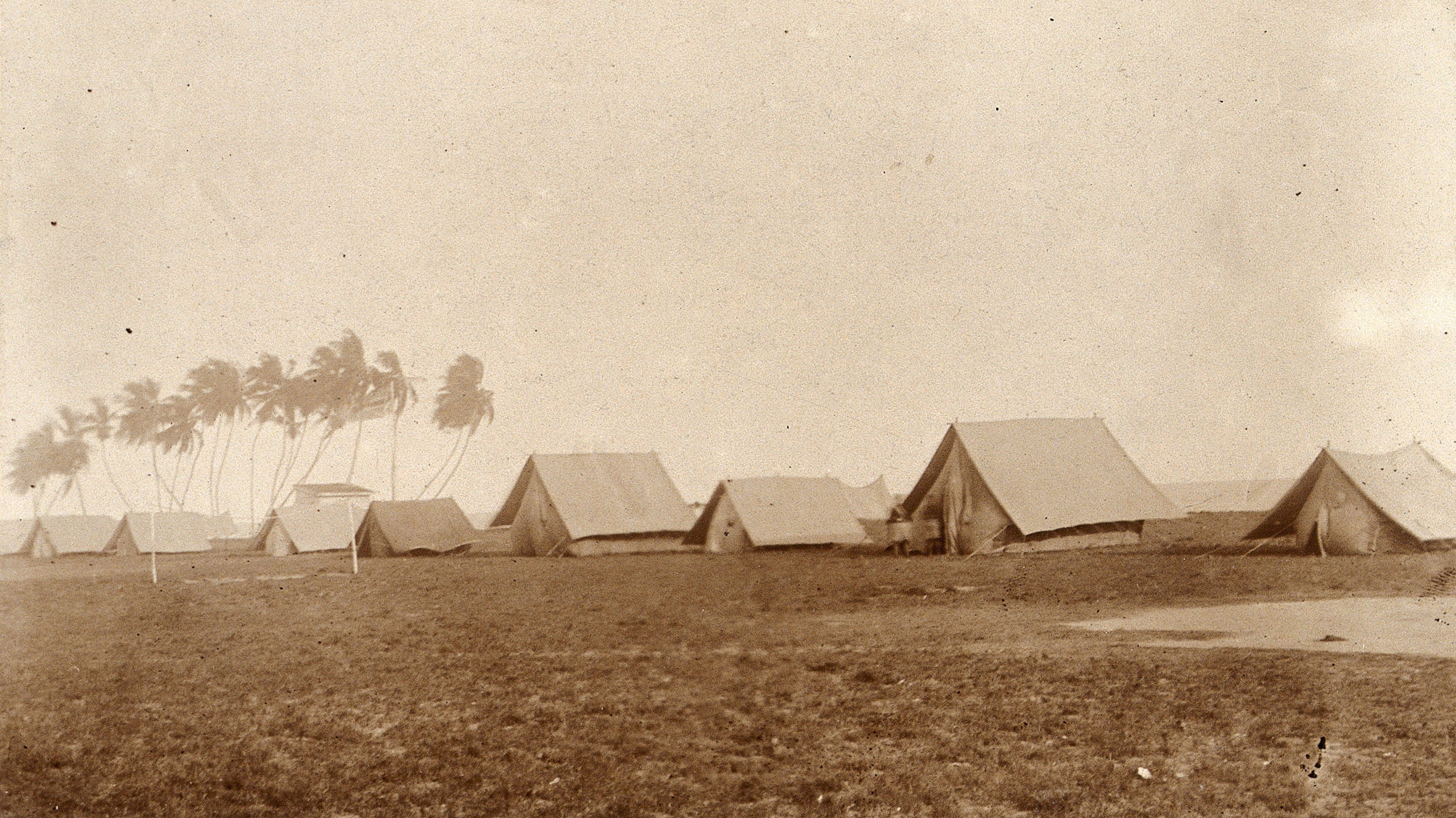 The historic black-and-white photo shows  rows of tents with palm trees to one side.