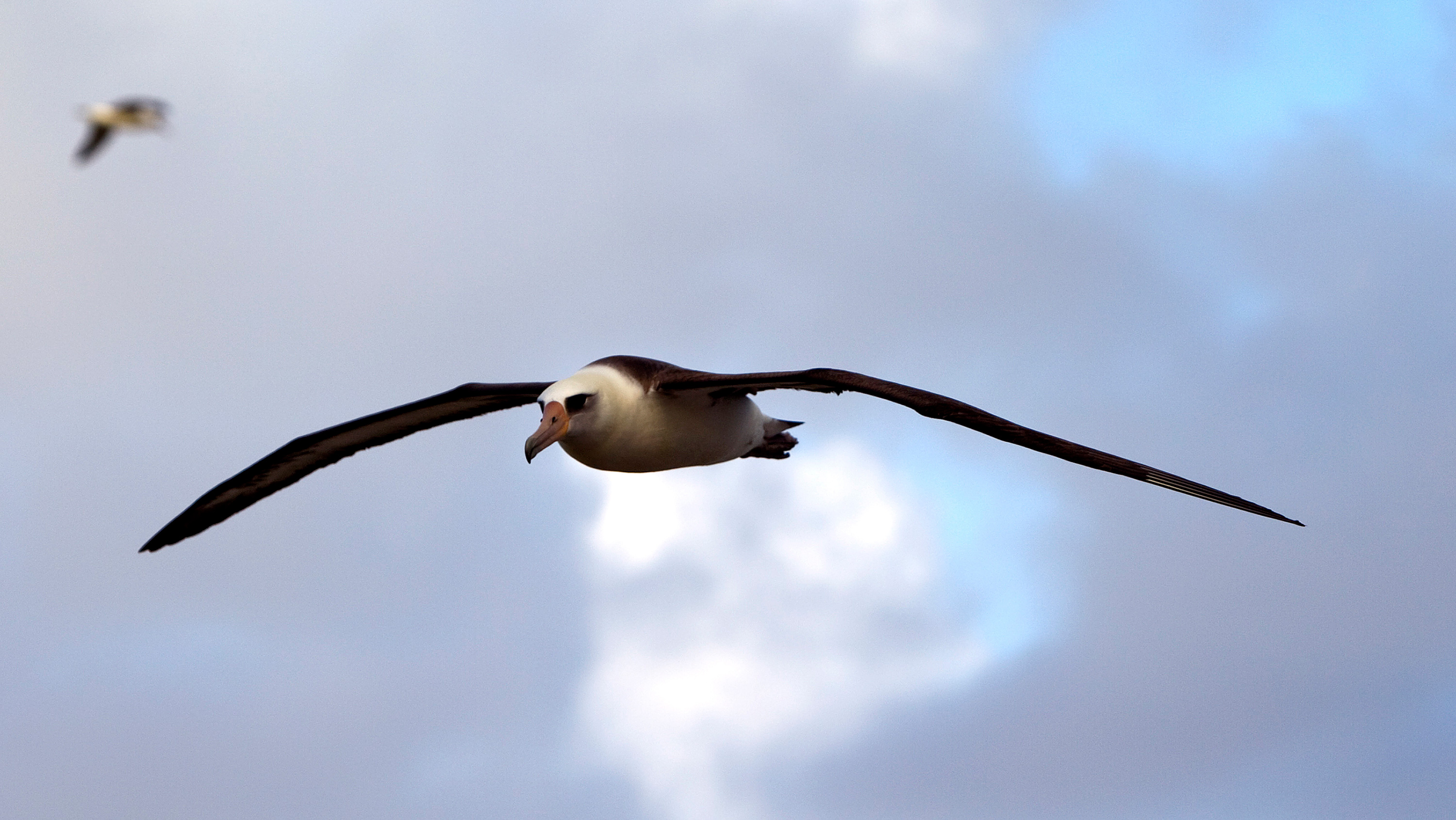 The photo shows a sea bird aloft against a blue sky.