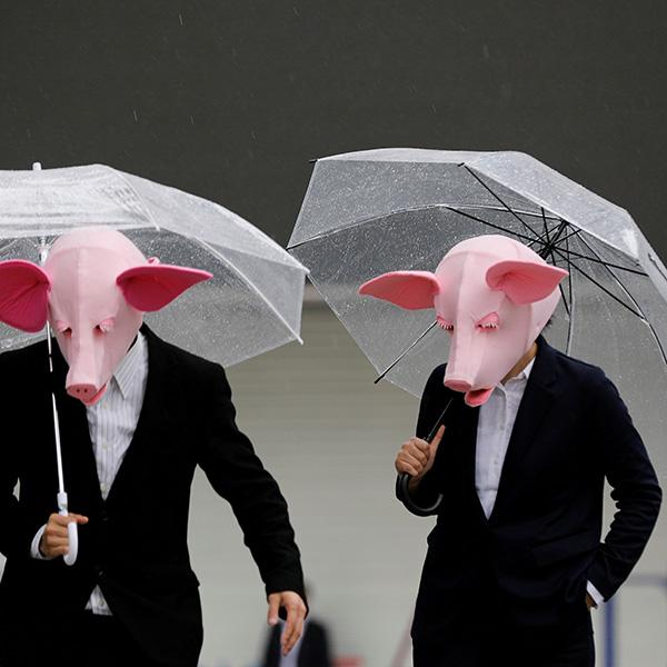 Youtubers wearing masks of pigs film a video at a shopping district, which has fewer people than usual amid the coronavirus outbreak in Tokyo, Japan, on May 19, 2020. The photo shows two people wearing pig masks and dark suits standing with clear plastic umbrellas open. REUTERS/Kim Kyung-Hoon