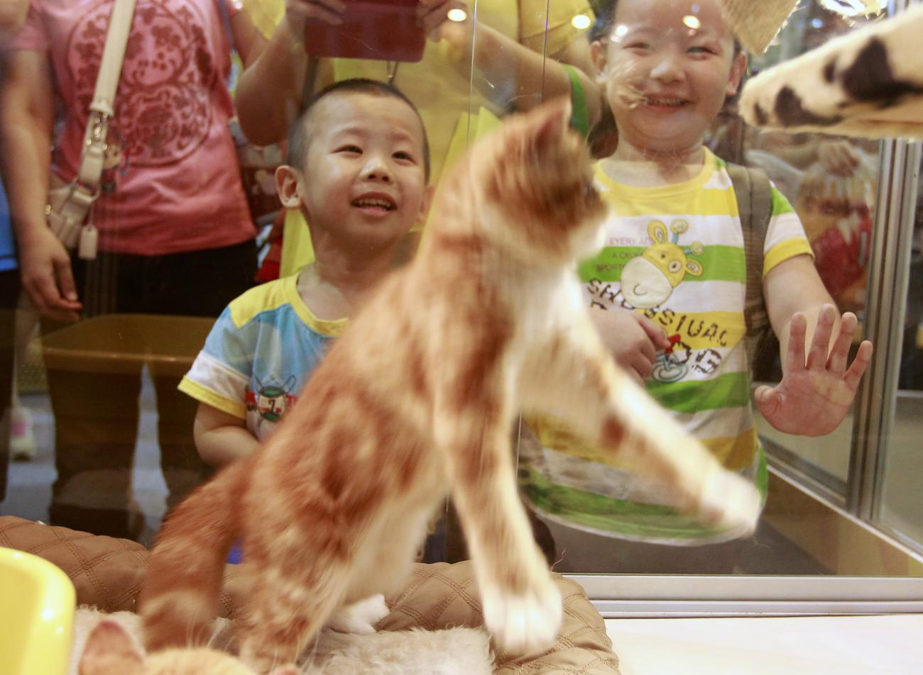 Children smile while watching a kitten play at the 2013 Taipei Pet Show at Nangang Exhibition Hall in Taipei July 27, 2013.