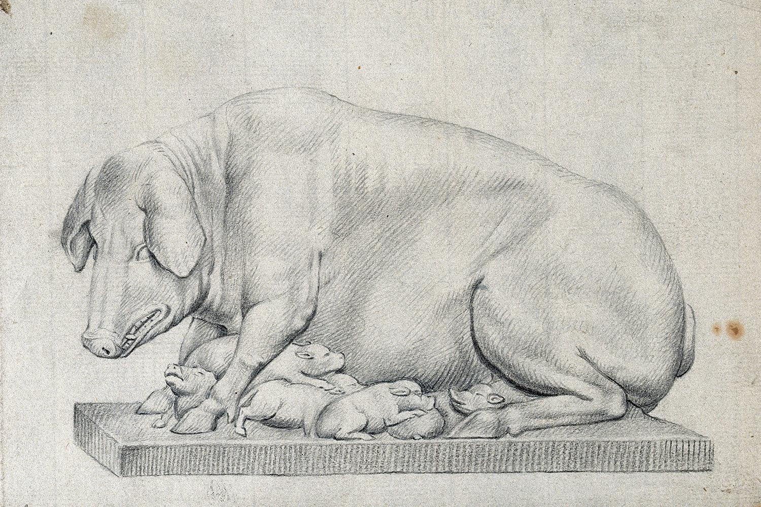 A statue of a hog with litter of suckling piglets. Pencil drawing by William Young Ottley (1771-1836). The picture is of a pencil drawing of a pig and her pups. CC BY 4.0 via Wellcome Collection
