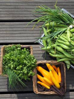 Orgeval yellow courgettes, chives, parsley, broad beans and spring onions from the vegetable kitchen garden installed on the roof of La Mutualite building in Paris July 23, 2013. Picture shows three baskets on a grey surface with a bounty of gorgeous vegetables.
