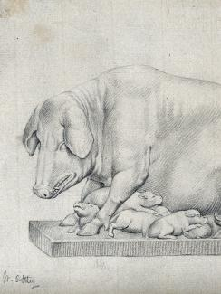 The picture is of a pencil drawing of a pig and her pups.